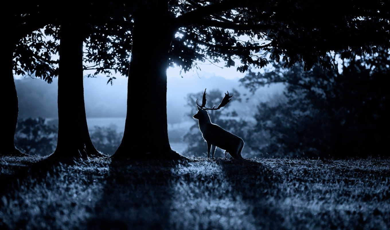 олень, лес, утро, природа, смотрите,