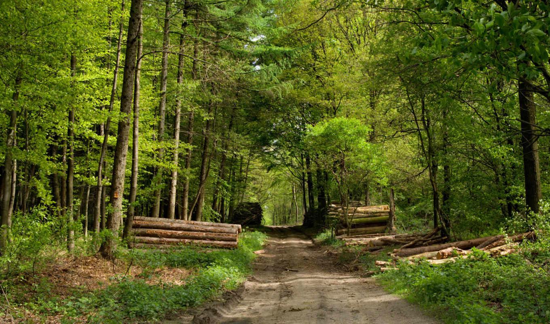 лес, дорога, природа, брёвна,