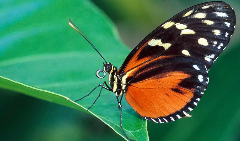 бабочка, cute, blue, картинку, butterflies,