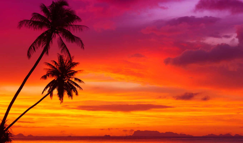 закат, пляж, небо, природа, palm, море, метки, тропики, tropical,