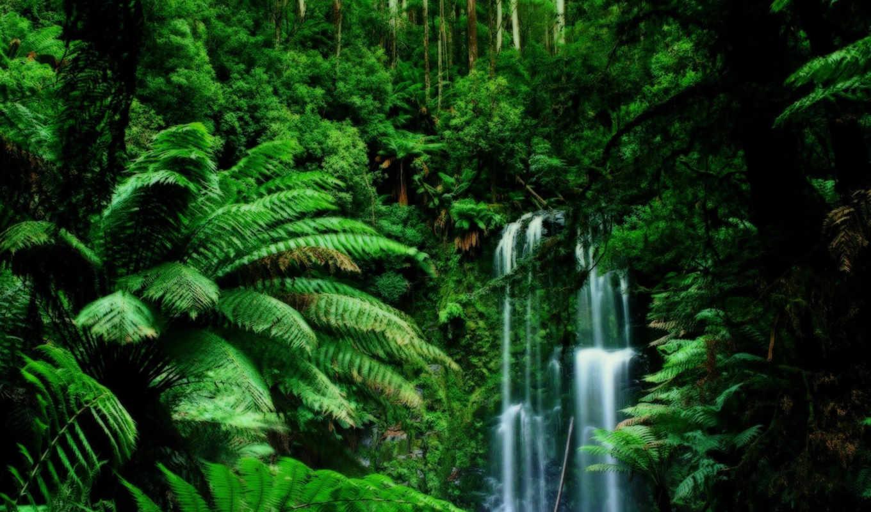 тропических, zhivotnye, лесов, растения, kartinka, devushki, растений, от,