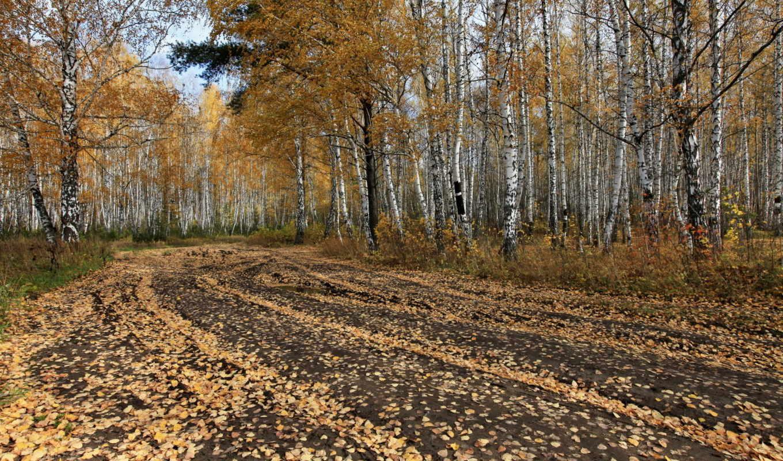 осень, деревя, рисунки, дорога,
