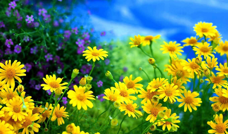 cvety, priroda, leto, makro,