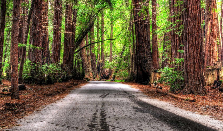 дорога, лес, wallpaper, деревья, free, forest, desktop, wallpapers, hd, обоев, powerpoint, природа, backgrounds, коллекция, education,