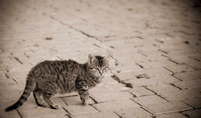 мостовая, улица, кошка, фонарь, zhivotnye,