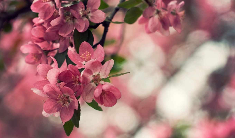 природа, цветы, листья, растение, боке,
