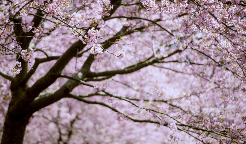 весна, цветы, рассвета, цитата, мар, community, свой, целикомв, птиц, сообщения, картинках,