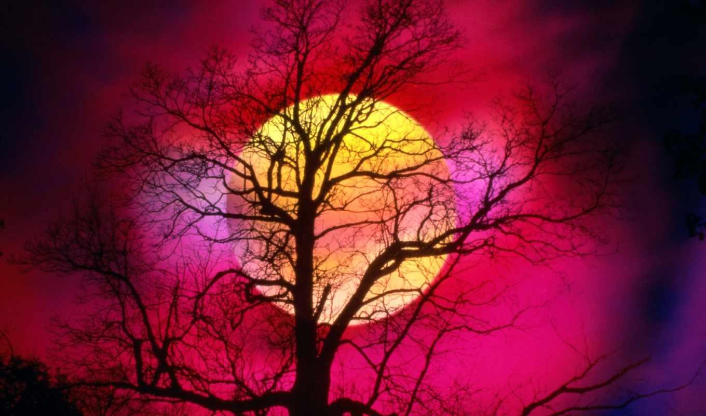 природа, красавица, this, showing, мама, merinews,