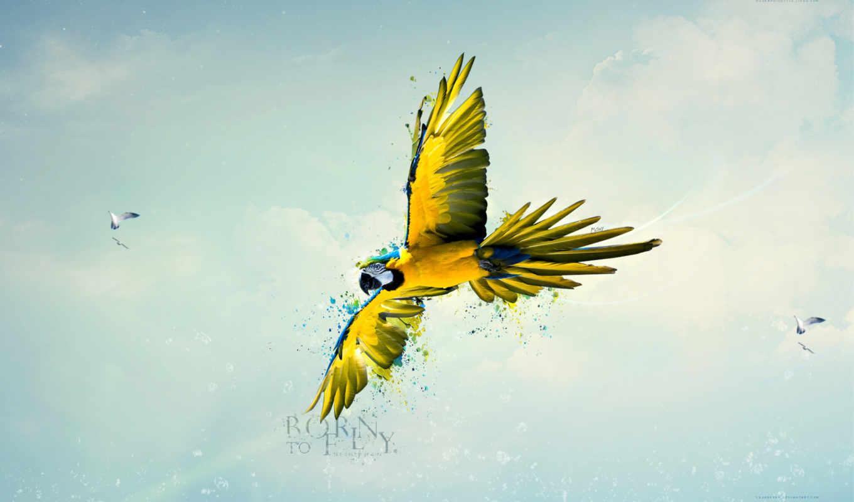 papel, parede, para, птица, попугай, arara, macaw, pinterest, pin, ara,