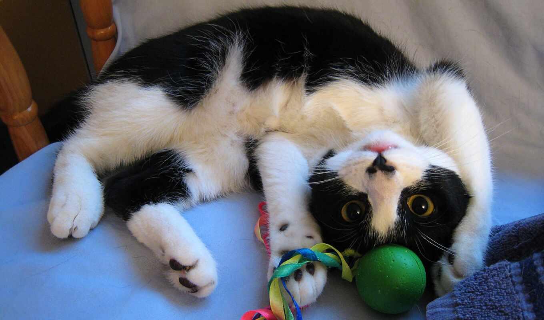 toy, кот, play, arm