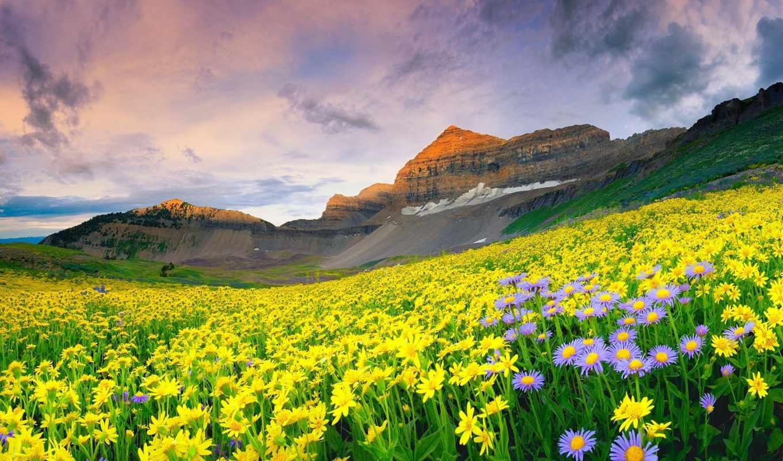 цветы, горы, долина, нояб, поле,