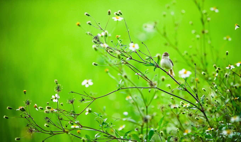природа, summer, птица, ветки,