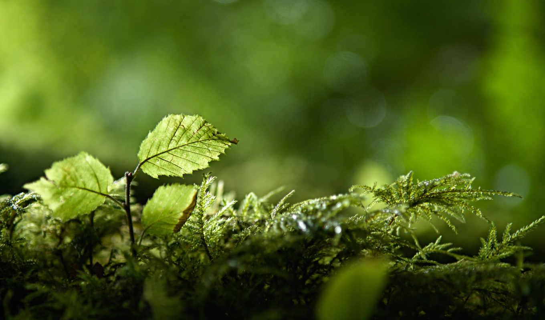 makro, priroda, макро, plants, зелёный, природа, молотый, растения, зелёный,