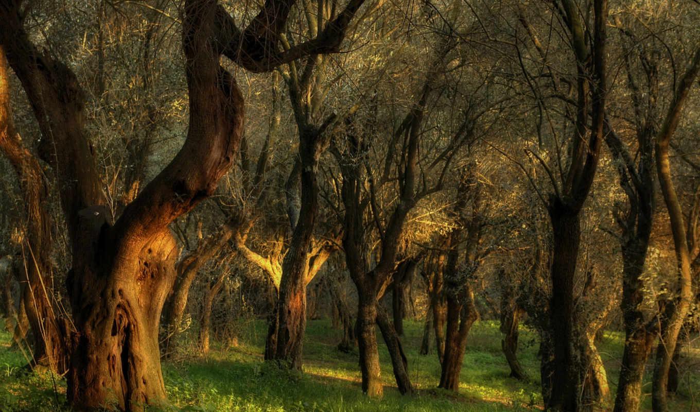 лес, trees, you, чудесные, пейзажи, выпуск, подборка, elements, фотографиях, июня,