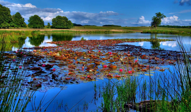рыбалка, небо, озеро, река, лилии, water,