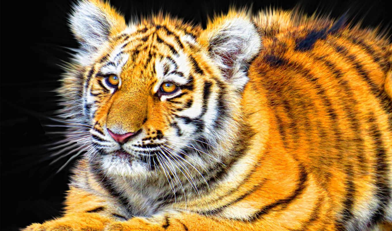 animals, free, desktop, images, найти, zone,