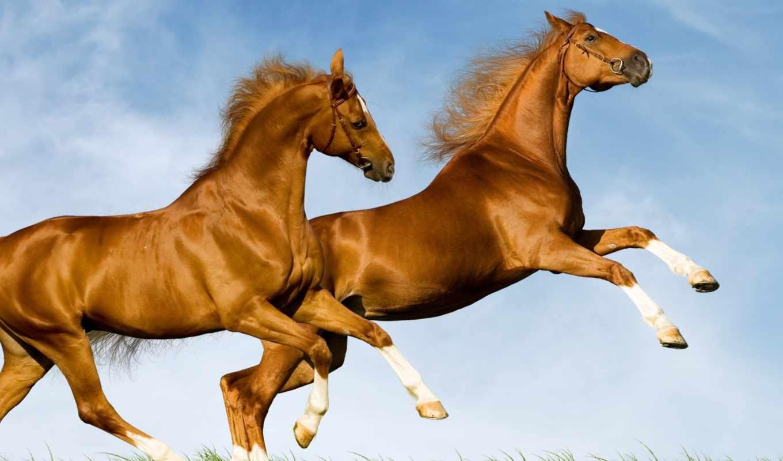 zhivotnye, лошадь, android, живые, размеры, mac, custom, ios, доступные,
