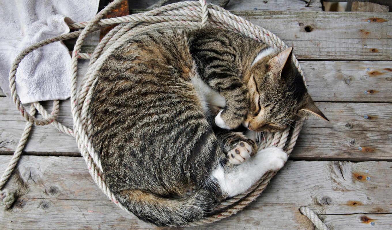 кот, кота, striped, серый, спит, юмор, коллекцию, лишай,
