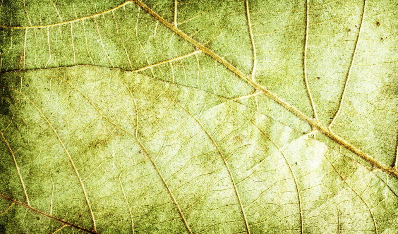 текстура, зелёный, листья, картинка, похожие, текстуры,