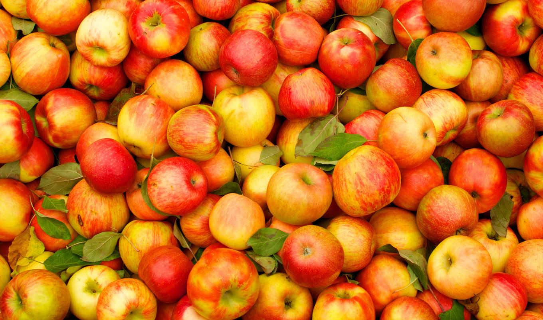 яблоки, красные,