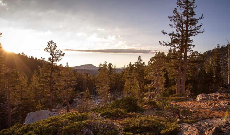floresta, bosque, para, paisajes, und, naturaleza, desktop, widescreen, musgo,