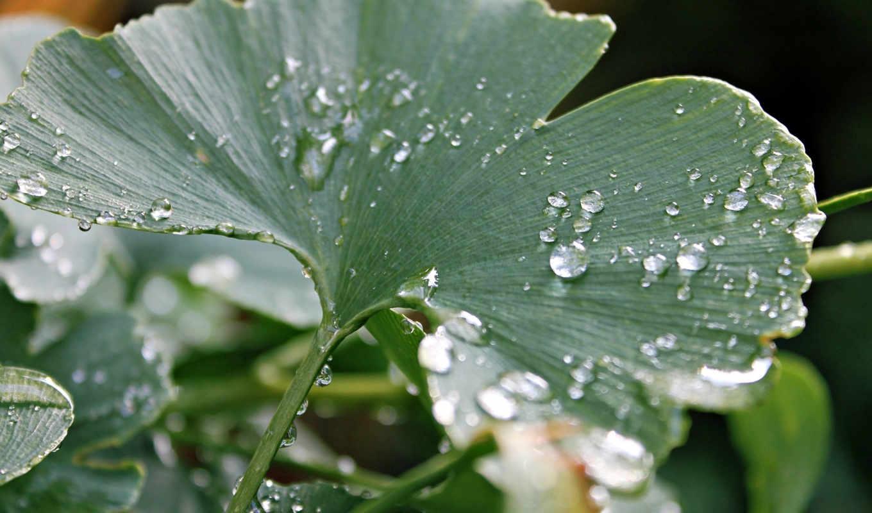 макро, капли, разделе, роса, лист, дождь,