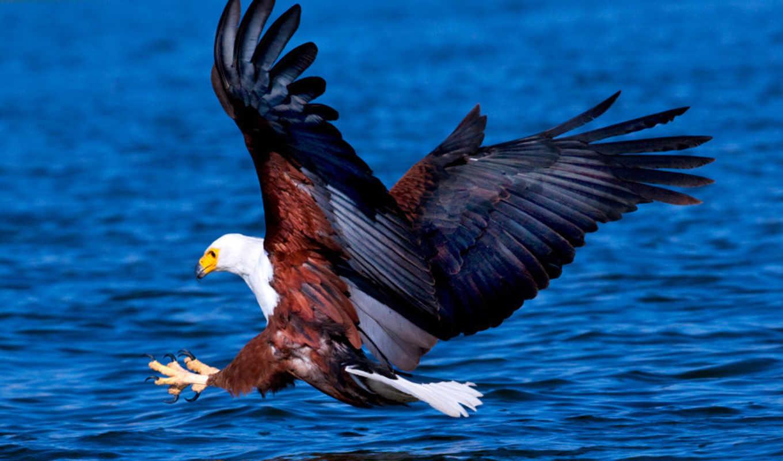photography, животные, июнь, derbent, орлан, фотограф,