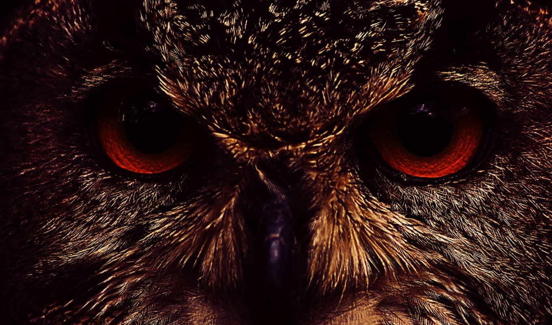 морда, свет, сова, совы,