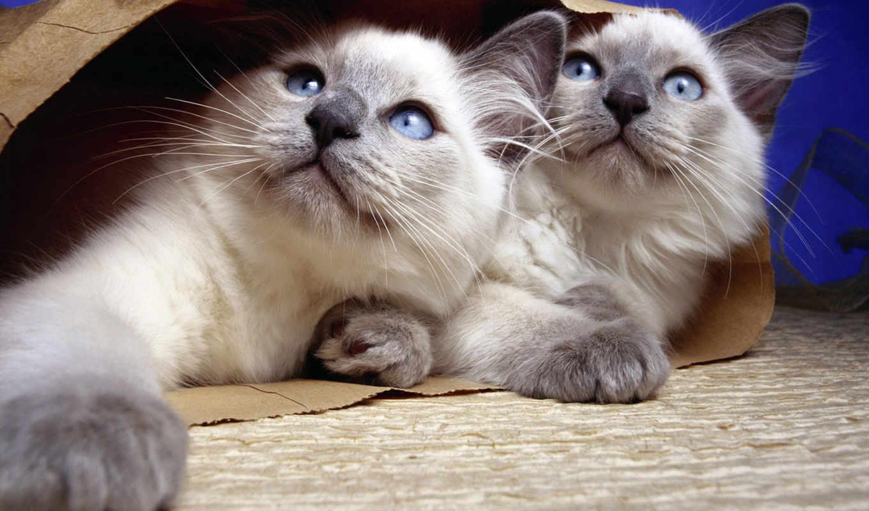 котята, мире, животных, кошки, живые, заставки,