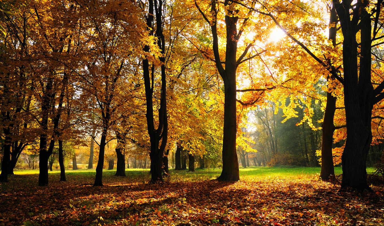 осень, park, листва, trees, browse, природа,
