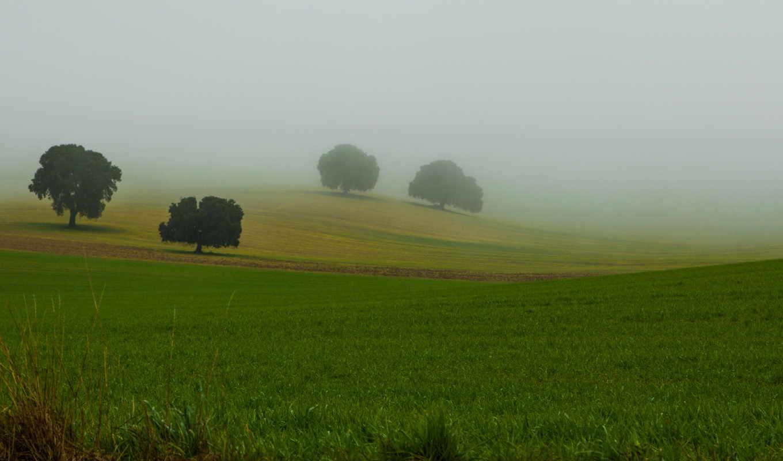 flickr, explore, прокрутка, favorites, herrera, antonio, navarro, показать, деревя, туман,