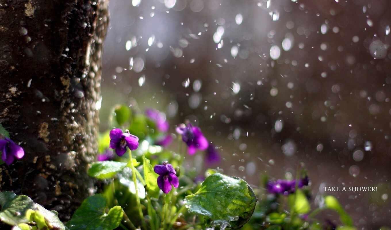 цветы, дождь, природа,