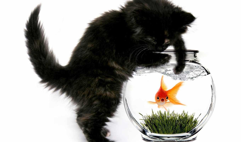 кот, аквариум, fish, котенок,