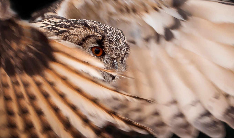 перья, птица, сова, крылья, голова,