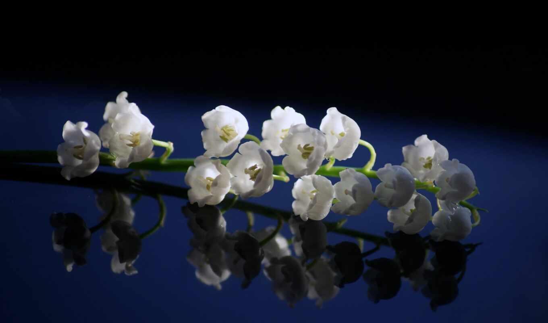 весна, цветы, красивые, качественные, заставки, автомобили,