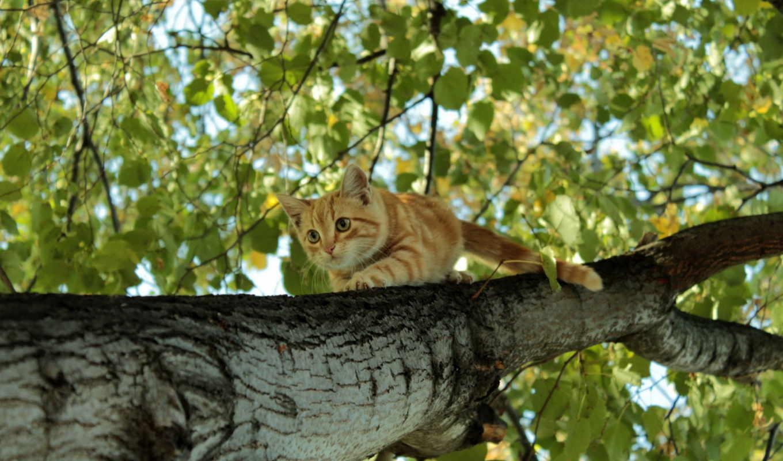 рыжий, котенок, дереве, животные,