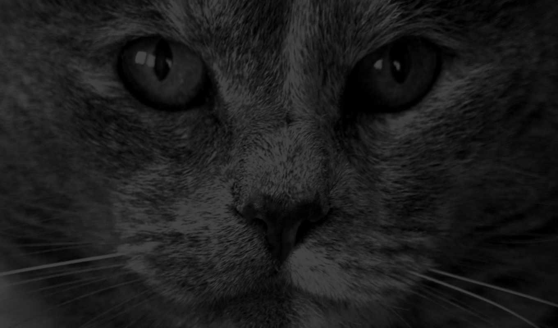 животных, животные, art, смотреть, тобой, за, котэ, животный, следит, image, музыка,