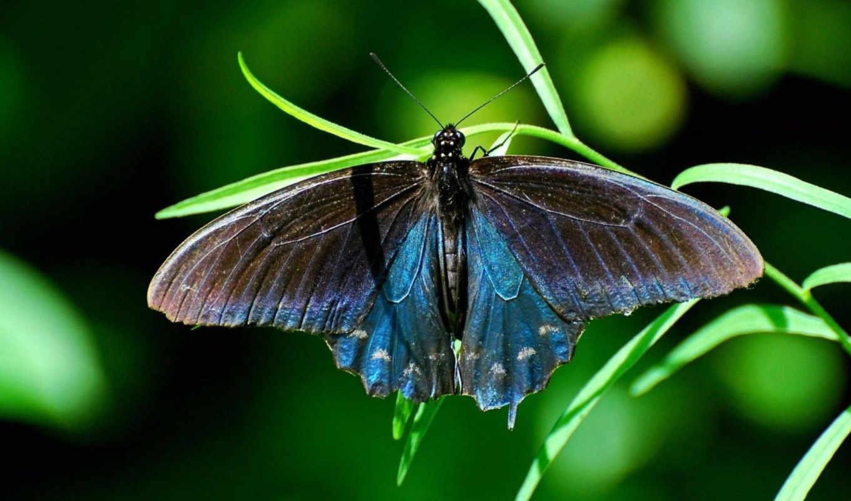бабочка, трава, насекомое, макро, best, похожие, смотрите, pack, номером,