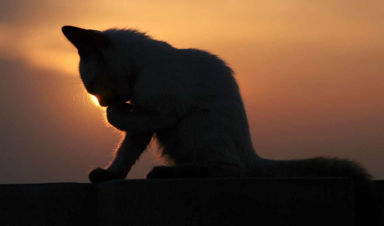 коты, фильм, кот, татьяны, www, родионовой,
