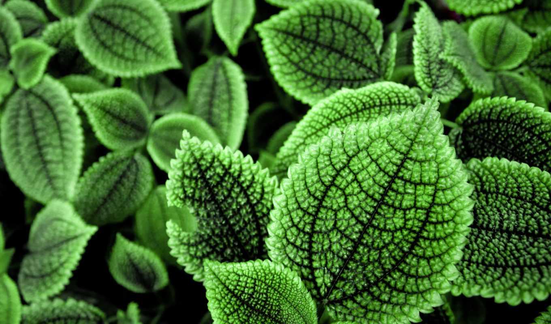 зелёный, листья, resolutions,