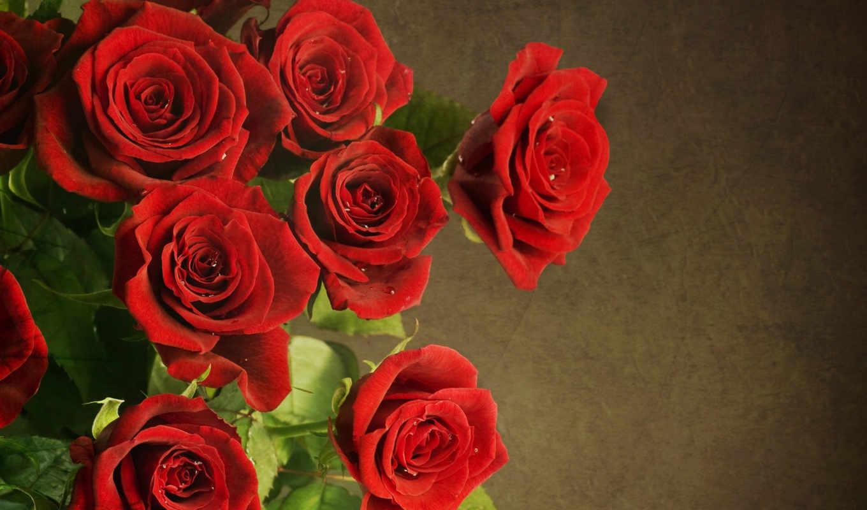 цветы, букет, красные, роз, розы, fone, роза, заставки, марта, чёрно,