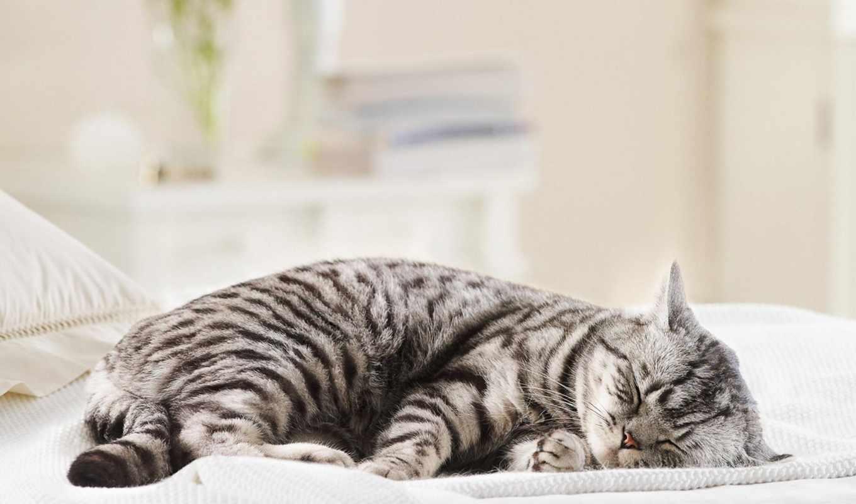 вискас, рекламы, кот, порода, кошки, котенок, stern, британская, кошек, реклама, этого,