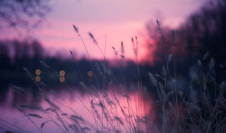 вечер, река, природа, трава, блики, картинка, планшета, смартфона,
