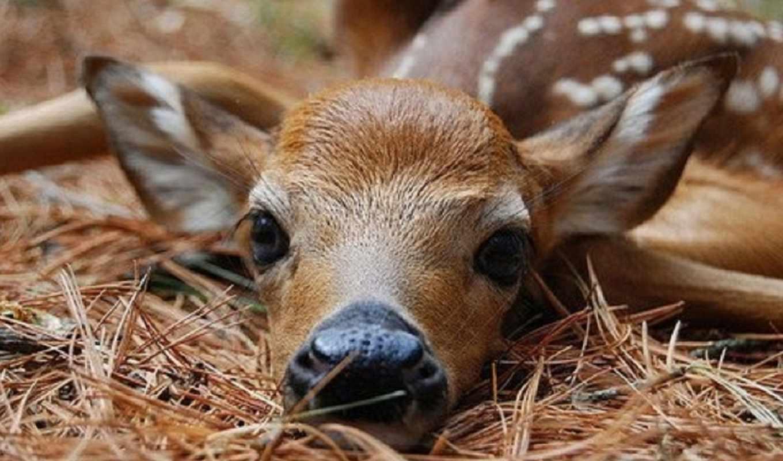 животные, милые, животных, забавные, олень, эти,