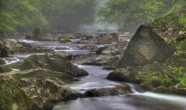 art, деревья, скалы, река, you, июня, туман, club, природа,