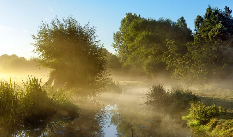 рассвет, туман, деревья, утро, небо,
