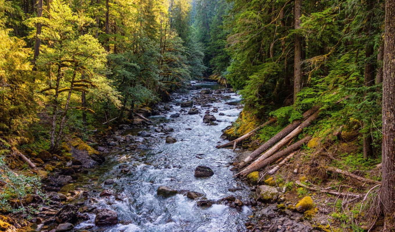 ,речка, лес, камни,
