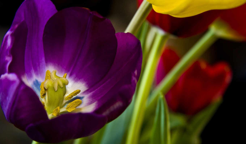 flores, fondos, pantalla, para, lila, fondo, gratis, las,