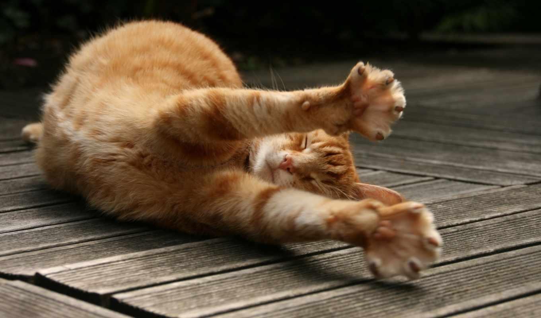 desktop, картинка, кот, добавил, super, кошки, рыжий, animals, котик, similar, zwierzęta, потягушки, потягивается, stretch, вытягивается,