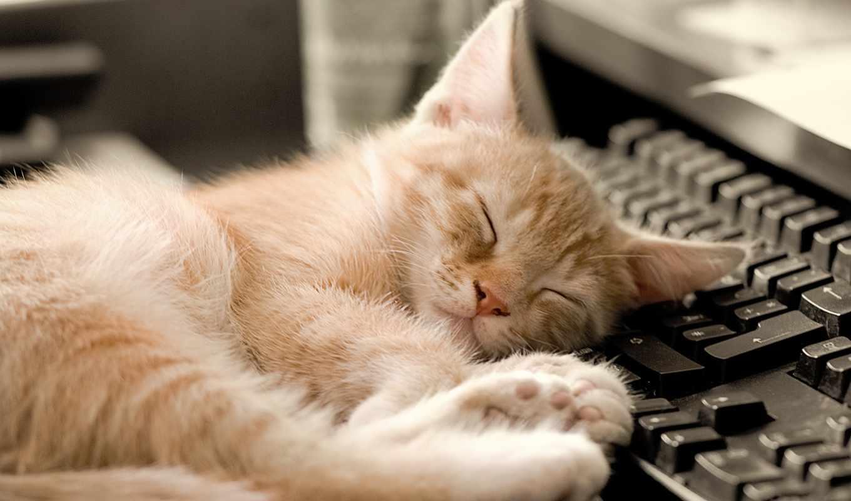 komputer, kot, коты, кошки, кошек, февр, чтобы, котик, кота, картинку,